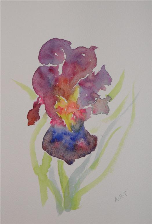 blue-iris