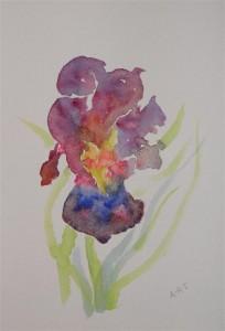 "Blue Iris, watercolour, 10"" x 8"""