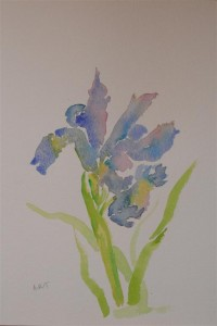 "Iris2 12"" x 8"", Watercolour on NOT paper"